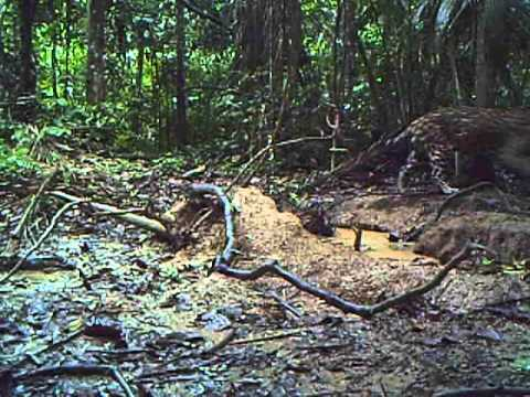 AN UNSEEN WORLD by Paul Rosolie, USA - Forest Film Winner