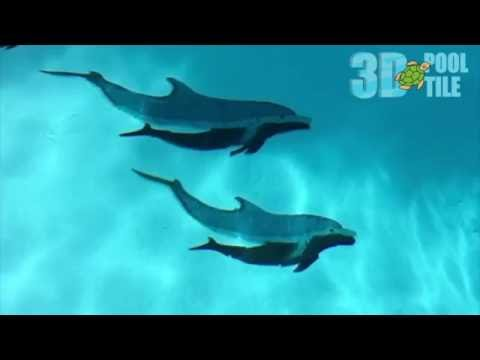 3D Pool Tile dolphins look like they are swimming in your pool. Realistic Swimming Dolphins!