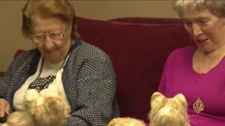 هذا الصباح- قطط إلكترونية مؤنسة للمسنين