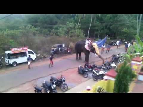 Ak elephant  ka tandav