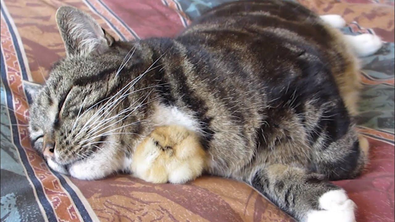 prevent cat shedding