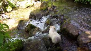 Pomeranians Hiking Millcreek Canyon
