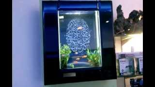 Photo Frame  Wall Aquarium 2012,design Jabbar,aquarium Design India ,spencer Plaza,chennai,india
