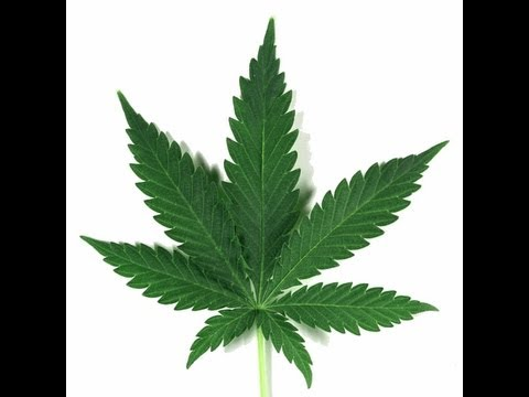 Eating Enough Phytocannabinoids Can Cure Almost Every Disease. We Have To Ignore The Law And Grow.
