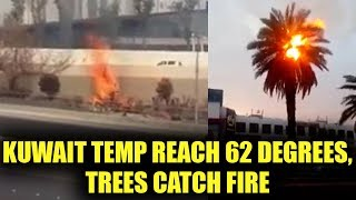 Kuwait witness 62 degrees Celsius temperature, Trees and bushes catch fire, Watch | Oneindia News