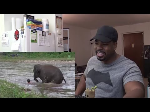 Elephant Rushes Into A River To Save A Mans Life She Thinks Is In Trouble!!!