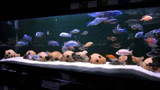 Большой аквариум в минском зоопарке.(группа вконтакте: http://vk.com/pgshelp1 сайт: https://sites.google.com/site/na5balov заказать работу: ..., 2014-07-23T16:20:25.000Z)