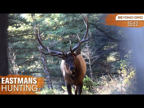 Giant Bull Up Close!! Bow Hunting Elk on Public Land in 4K