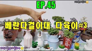 EP.45 베란다걸이대 물든 다육이#3