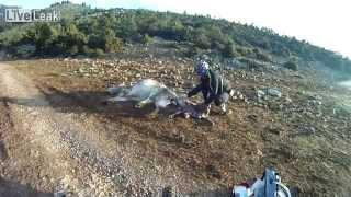 Ciclistas ajudam vaca quase morta a dar à luz
