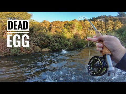 EPIC Close Range Dead Egg Fishing!
