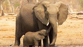 Fillerin Dünyası Bilgimatik 4.Program