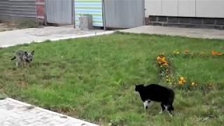 Cachorro vs Gato (briga de rua)