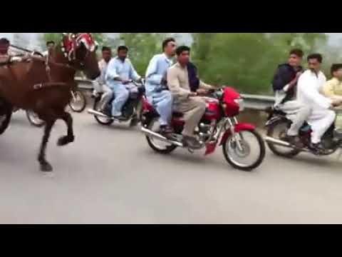 Sher marina pakistan hazroo ghora 2018
