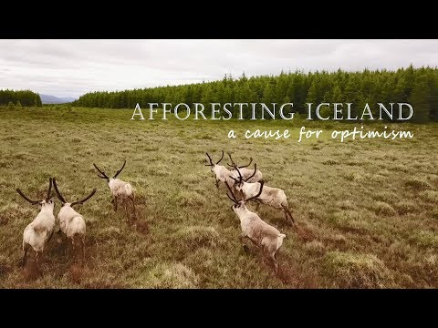 Afforesting Iceland - a cause for optimism