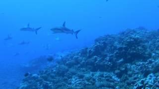 投稿者:ダイバーヒロさんコメント ファカラバ環礁はタヒチな中でもまだ...