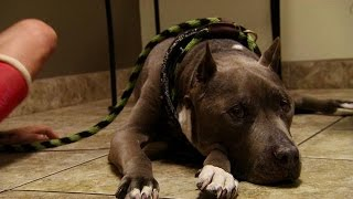 When Tania Lost Her Best Friend | Pit Bulls and Parolees