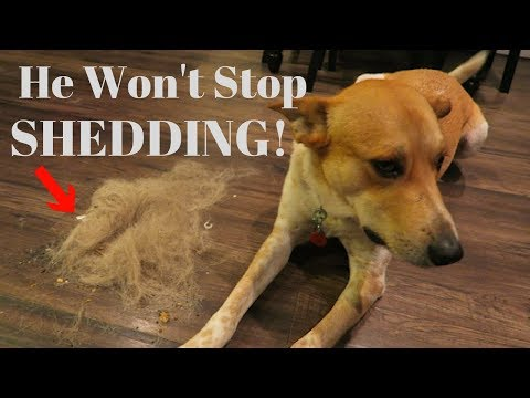 How To Stop Your Dog From SHEDDING!