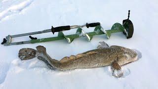 Зимняя рыбалка / Налим / Ice Fishing