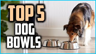 Top 5 Best Dog Bowls in 2020