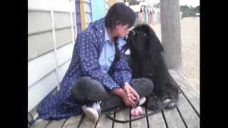 My Newfoundland Dog: Honeybun At Brighton And Rainbow House 06 Oct 2014 (with Parker)