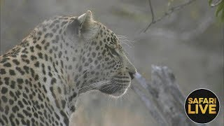 safariLIVE - Sunrise Safari - August 13, 2018
