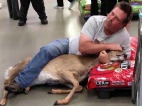 Deer Spotted Inside Wadena Walmart