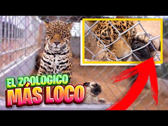 EL MEJOR ZOOLOGICO DE TODO MEXICO - Dororock