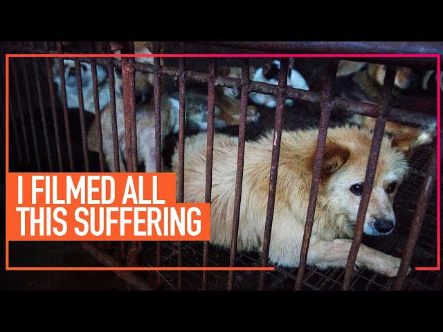 A Message from Co-Founder, Jose Valle, About the Dog and Cat Meat Trade