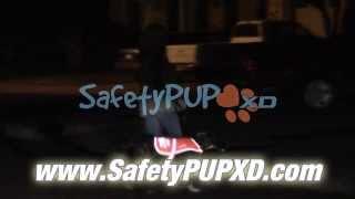 Dog Vest, New To The Market, Improves Quality & Design - SafetyPUP XD Reflective Dog Vest