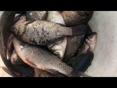 Рыбалка. усманский район, Липецкая Область. #GoProHERO7BLACK