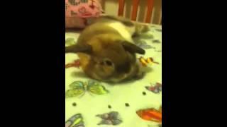 Bunny Flip :D