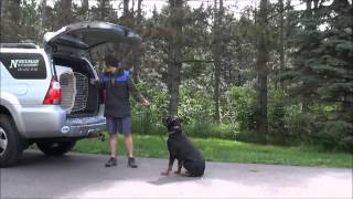 Maverick (rottweiler) Trained Dog Video Minneapolis