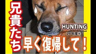 【狩猟】猪猟はチームワークが不可欠!(閲覧注意) thumbnail