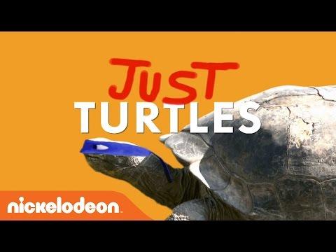 May 23rd Is World Turtle Day! | Teenage Mutant Ninja Turtles | Nick