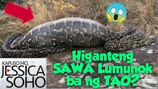#kmjs #kapusomojessicasoho #higantingsawasaaurora #trendingvideos#viralvideos