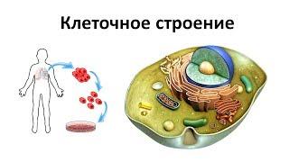 1. Строение клеток человека (8 класс) - биология, подготовка к ЕГЭ и ОГЭ 2019