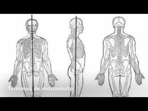 Términos anatomía - YouTube
