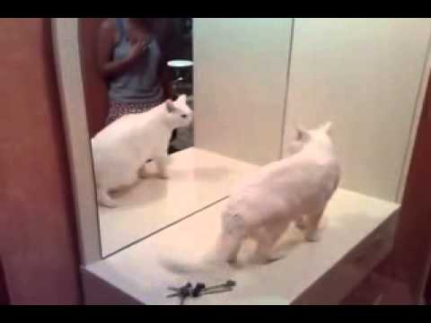 Smart cat Fighting with own mirror cat – Amazing  funny videos