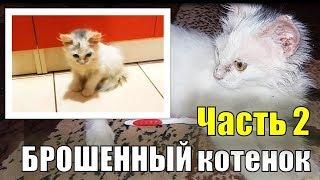 Брошенный котенок 2/3 часть спасения бездомного котенка