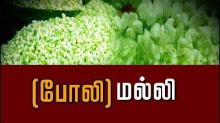 Mallikaiyil Kalappadam 19-09-2018 Puthiya Thalaimurai Tv