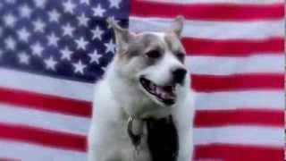 Zero Bark Thirty.  Starring Koda (husky/lab Mix)