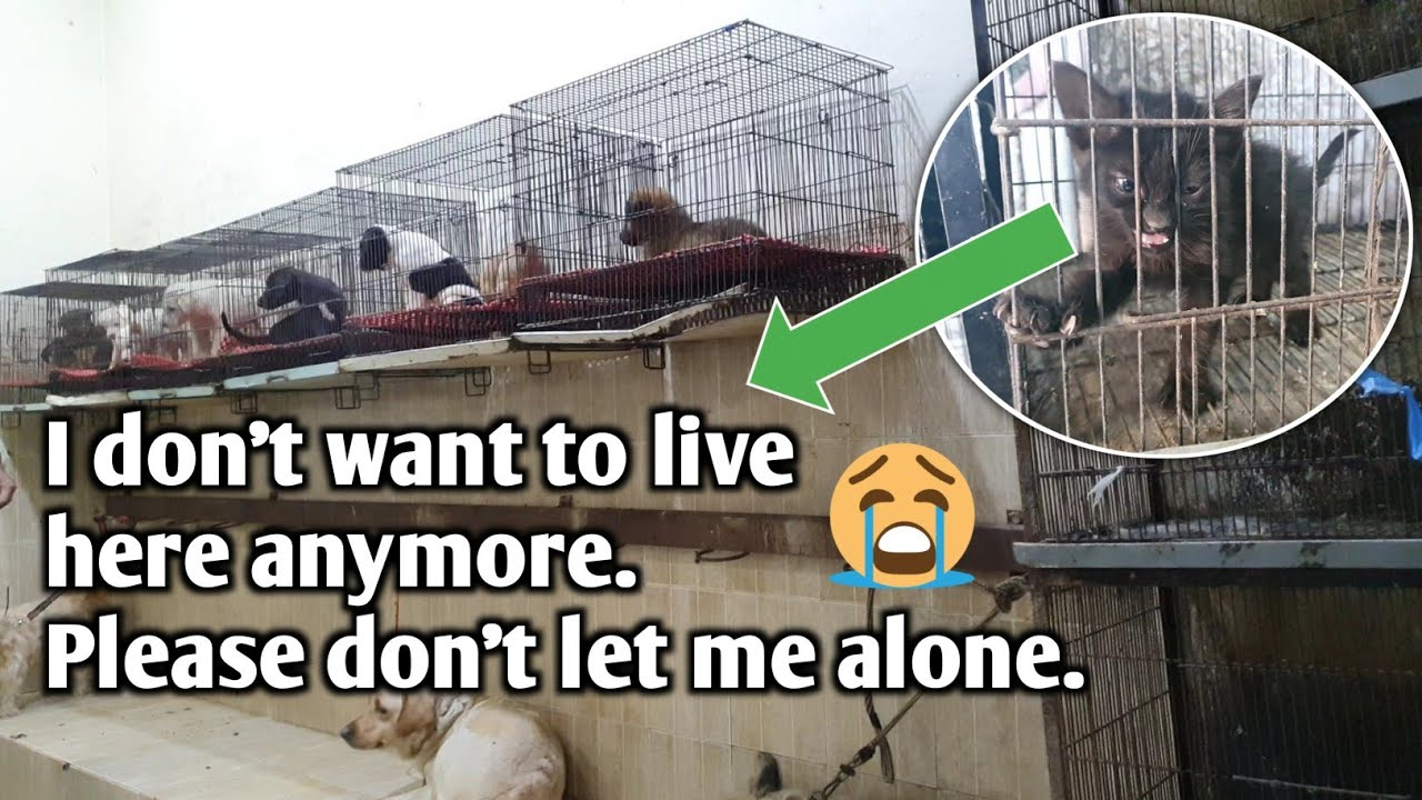 Sad kitten don't want to live in cage but no one is ready to free him from imprisonment