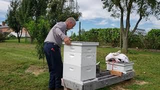 mixing and feeding bees sugar water