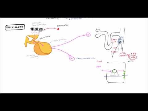 Diabetes Insipidus for USMLE Step 1 and USMLE Step 2