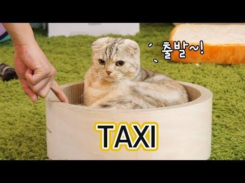 고양이 택시를 탄 고양이 손님들 -꿀잼-