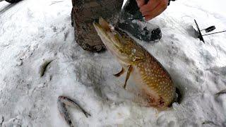 РЫБАЛКА УДАЛАСЬ ЛОВИМ ЩУК ОКУНЕЙ И ЖАРИМ РЫБУ FISHING WAS A SUCCESS WE CATCH PIKE PERCH