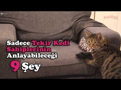 Sadece Tekir Kedi Sahiplerinin Anlayabileceği 9 Şey