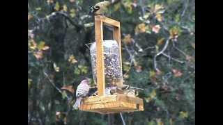 Wait-in-line Bird Feeder