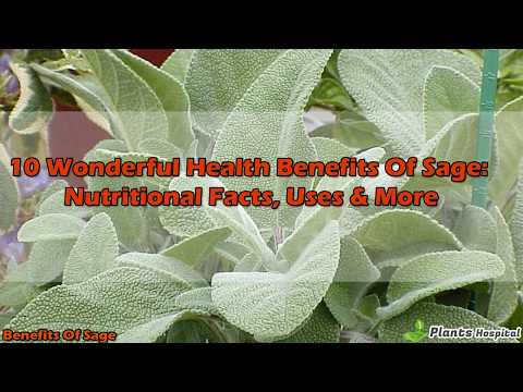 10 Wonderful Health Benefits Of Sage: Nutritional Facts, Uses & More